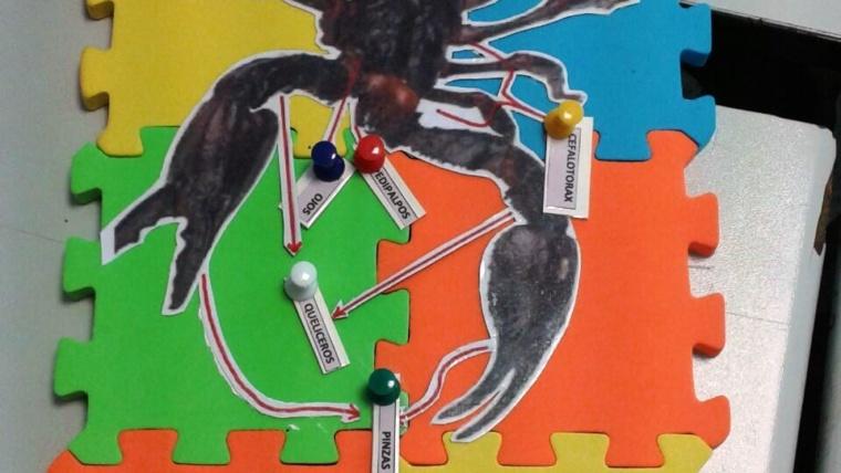 Talleres sobre insectos y arácnidos